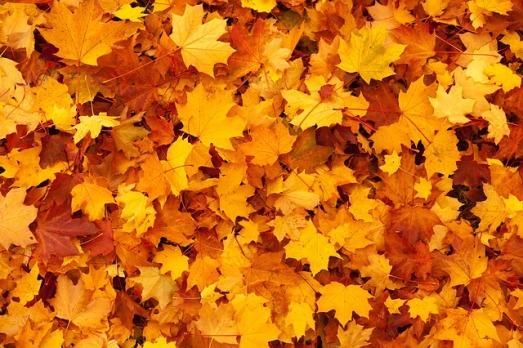 autumn-83761_640